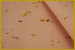Flower pressed Papers