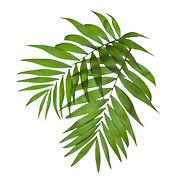 Palm Tree Blade