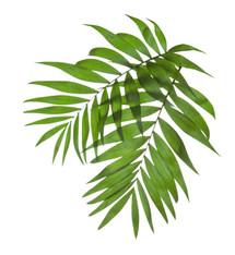 Palm Tree Leaves yoga