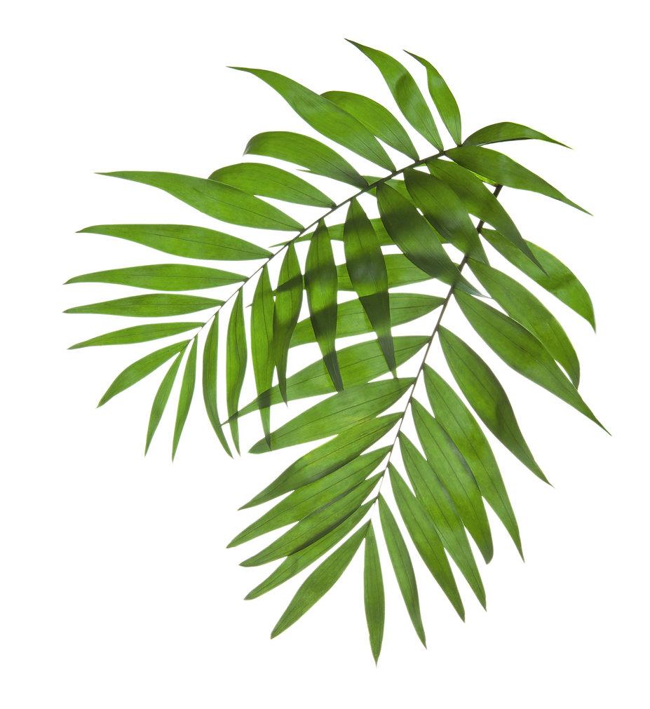 Palms leafs on Grace Bay Beach