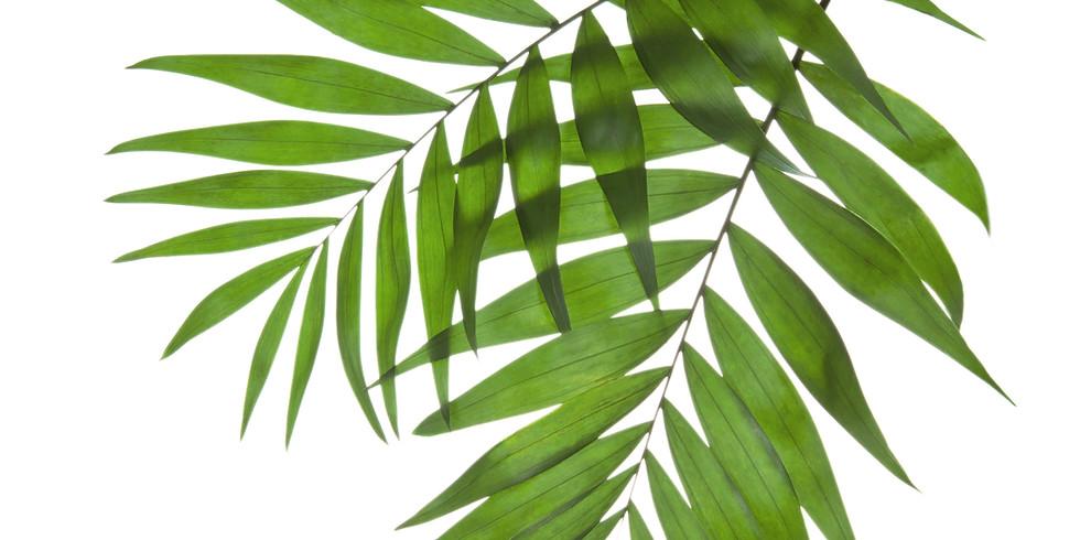 Palm/Passion Sunday