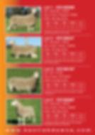2019 Stud Sale Ram Catalogue2.jpg