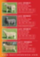 2019 Stud Sale Ram Catalogue3.jpg
