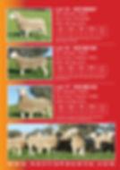 2019 Stud Sale Ram Catalogue4.jpg