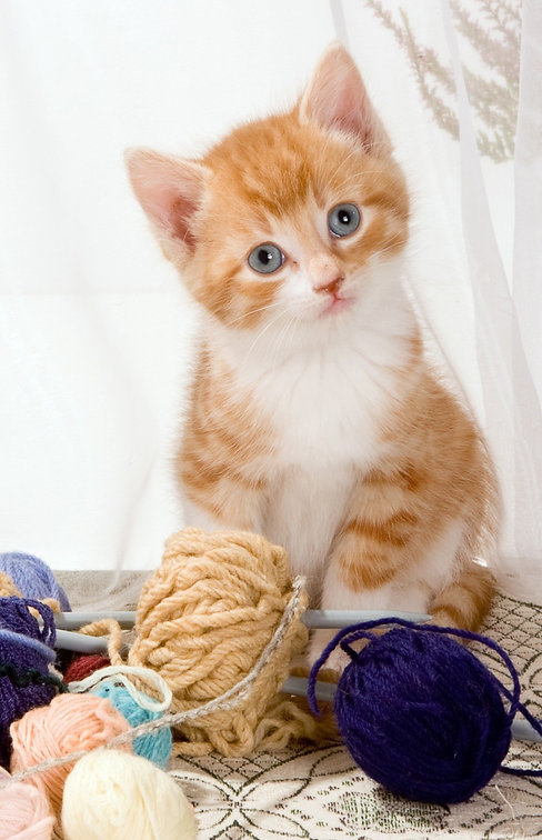 309806-kittens-cat-yarn-animals.jpg