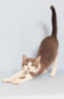 Yoga Cat.jpg