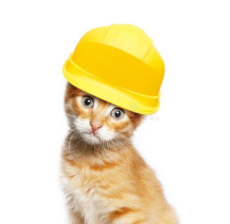 red-cat-helmet-white-background-67470239