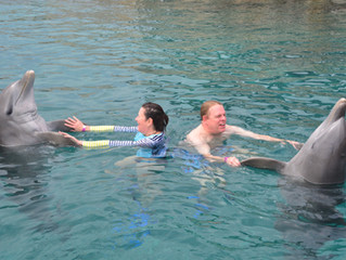 Swim With The Dolphins: What You Should Know.