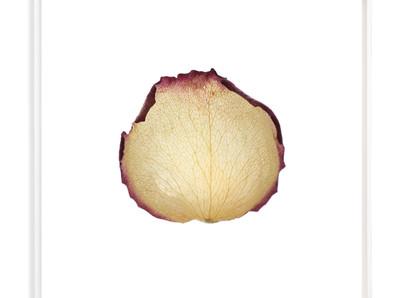 Le rose di Boris Grozdanič Gorjan ci ricordano la bellezza della caducità