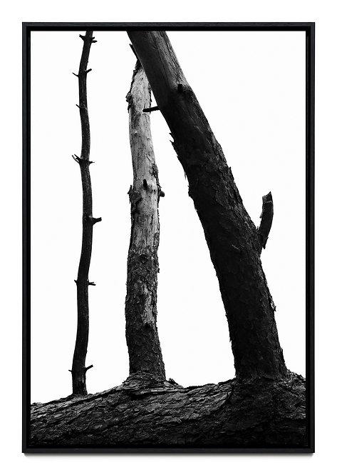 T2881 - Boris Grozdanic Gorjan - FMB Art Gallery