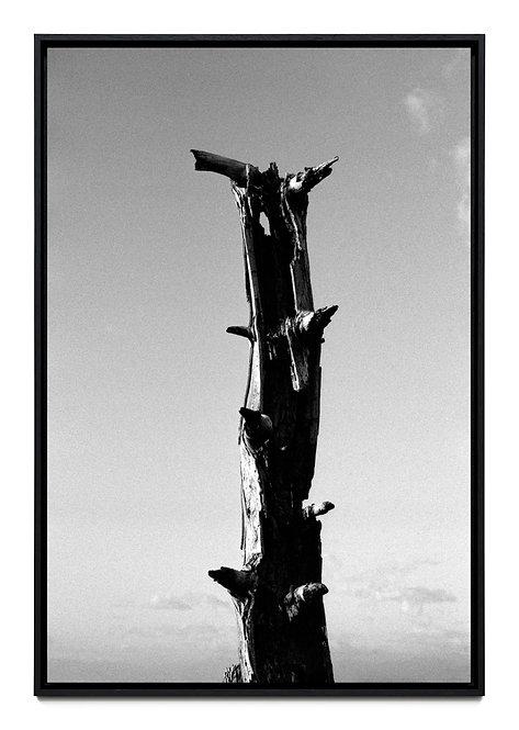 T0008 - Boris Grozdanic Gorjan - FMB Art Gallery