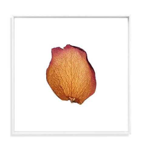 Roses0332 - Boris Grozdanič Gorjan - FMB Art Gallery