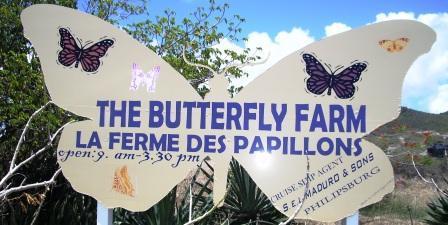 Buttefly Farm