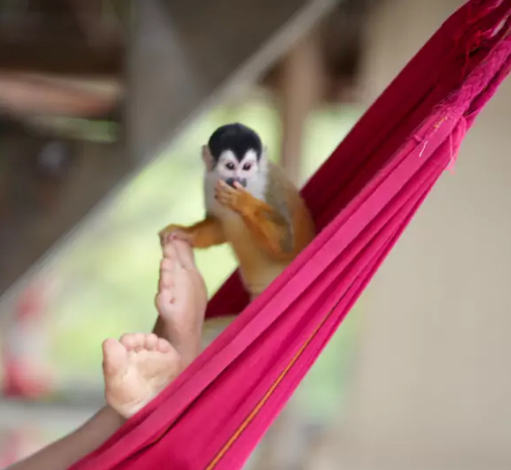 Urraca-Panama-Private-Islands-tour-package-all-inclusive-monkey.png