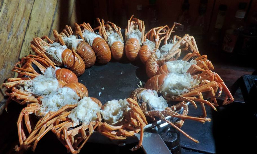Urraca-Panama-Private-Islands-tour-package-all-inclusive-lobster.jpg
