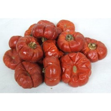 Solanums (Mini Pumpkins!)