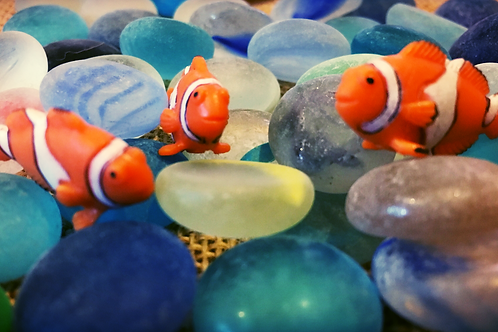 Clownfish 'Mite'