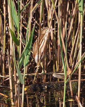 birds-2630359_1920.jpg