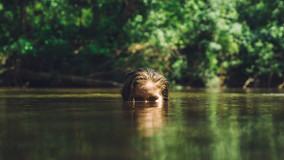 lake-swimming-health-wellbeing.jpg