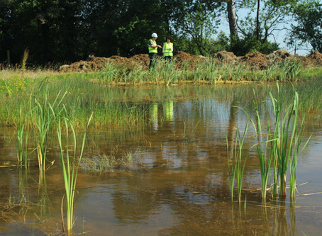 Great crested newt mitigation scheme expands to include Gloucestershire