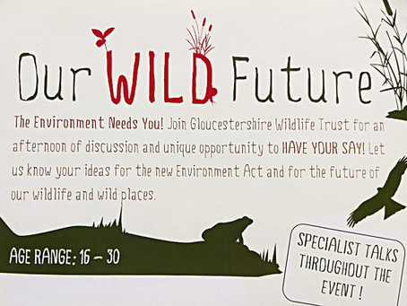 Call for Young People to Campaign for Wildlife