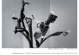 「パスカルの蝶たち」展|2021年5月1日→9日|ご観覧の中止について