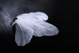 「パスカルの蝶たち」展 2021年5月開催予定の参加型アートイベントの概要