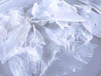 オルタナティブスペースKの家 オープンイベント naO Kimura展「K氏と霧蝶」ー 曖昧な存在の行方 ー