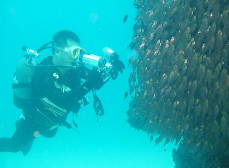 奄美ダイビングスポット『東の根』