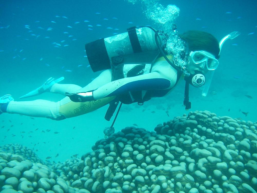 ダイビングスポット『大仏サンゴ』