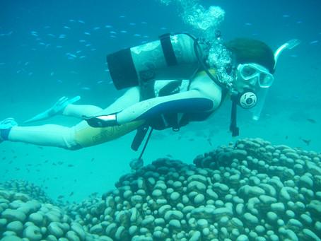 奄美ダイビングスポット『大仏サンゴ』