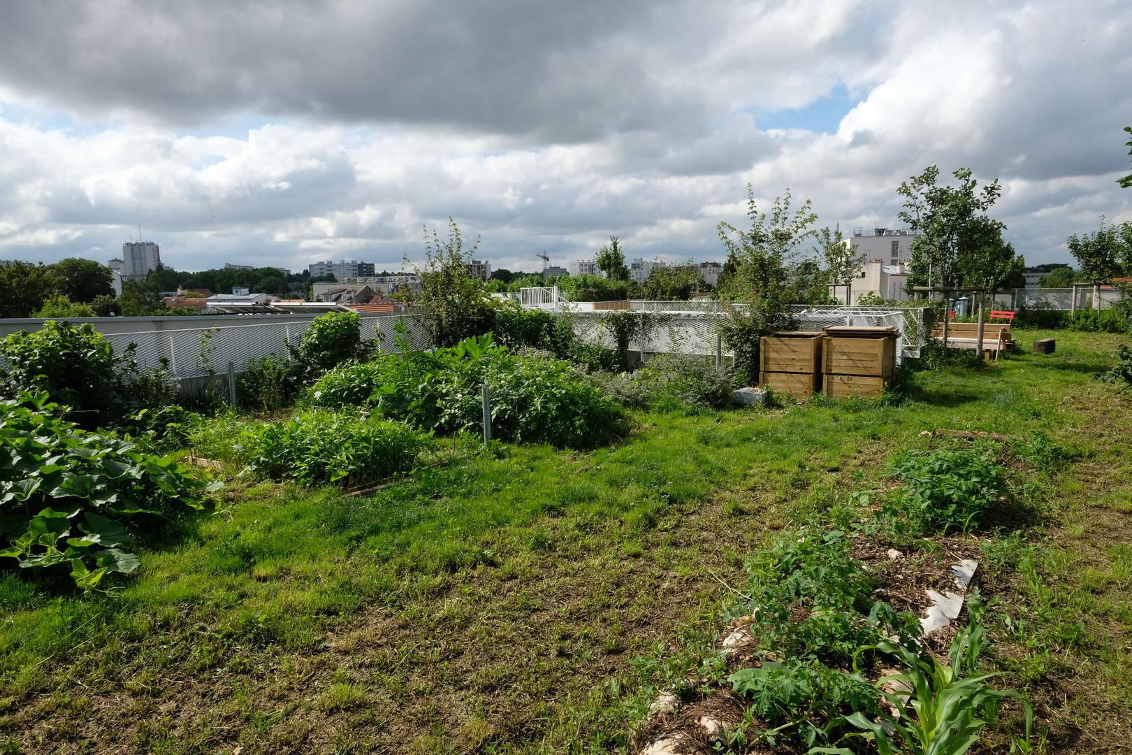 Le jardin collectif sur les toits au jardin divers avec 80 cm de pleine terre