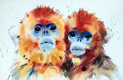 Snub Nose Monkeys