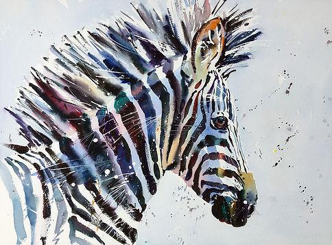 Zebra 35.JPG