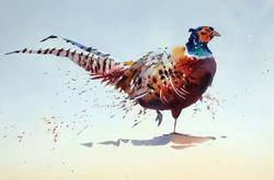 Phoxy Pheasant
