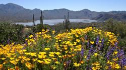 Springtime in AZ