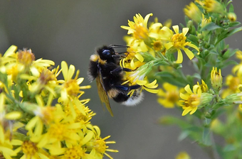 Bee_color.webp