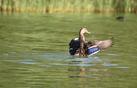 Duck_look.webp
