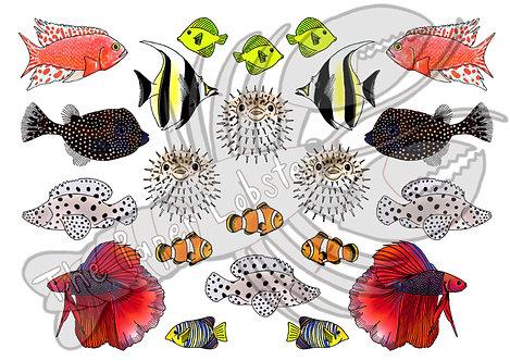 MINI - Fish in the sea
