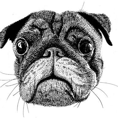 Archie Pup