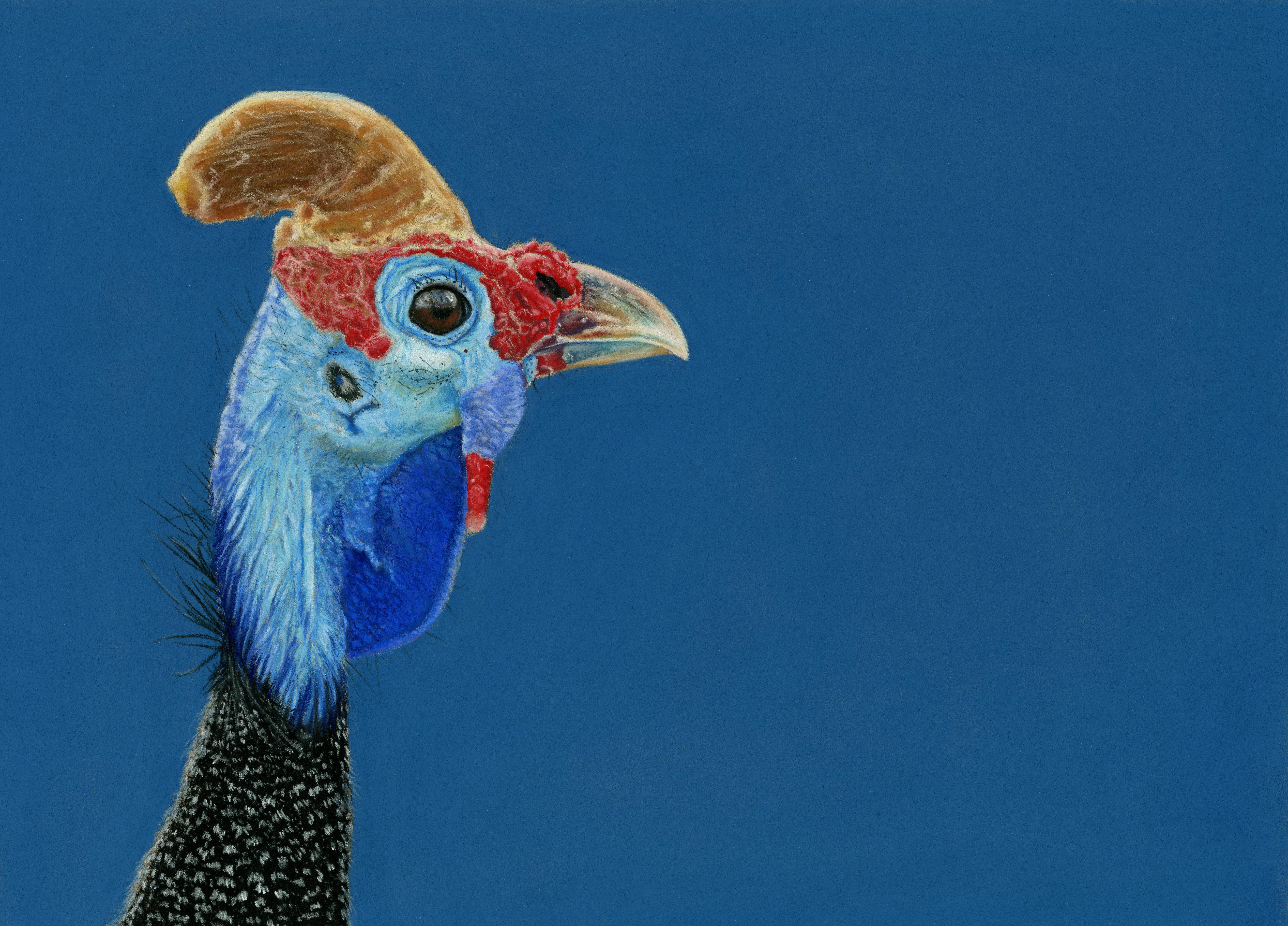 Guinea Fowl - Flamboyance