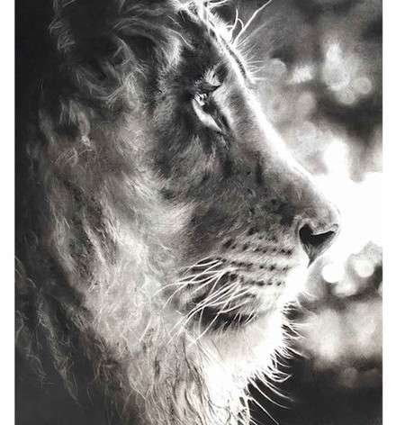 sarah stokes lion.jpg