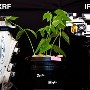 Monitorando a absorção de nutrientes pelas plantas