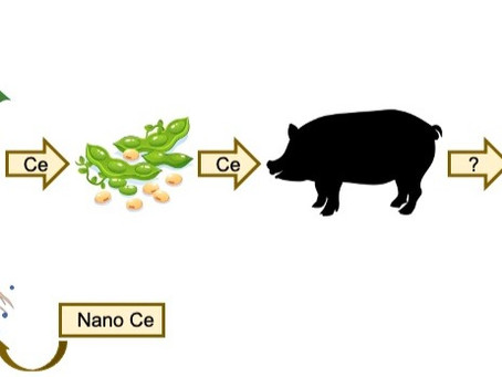 Nanopartículas na cadeia alimentar?