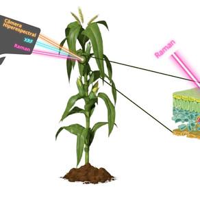 Absorção de nutrientes via foliar e as tecnologias envolvidas no seu monitoramento.