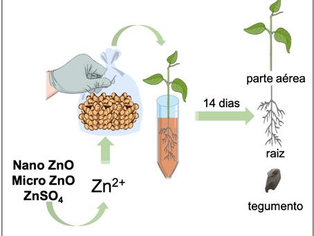 Tratamento de sementes de soja com nano Zn