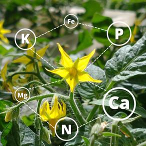 A importância de pesquisas sobre nutrição mineral de plantas