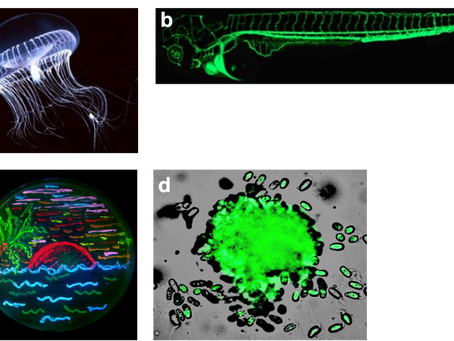 GFP making the invisible light visible: The physics behind!