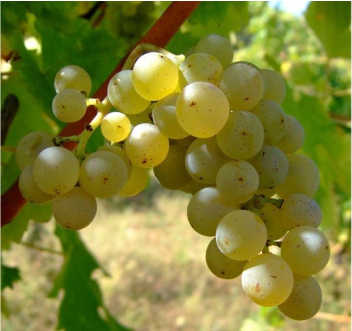 Wine, Food, Crete, Navigator, Consulting, Entrepreneurship