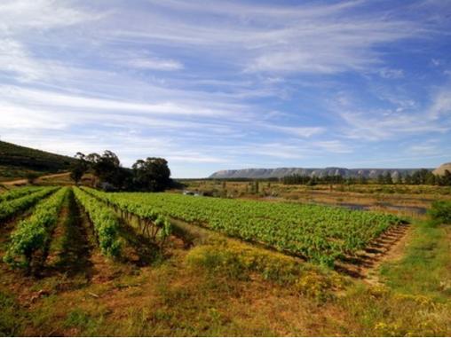 Navigator starts market analysis of the German wine sector